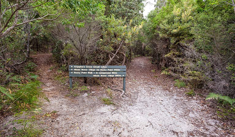 Angophora grove walking track - Accommodation Rockhampton