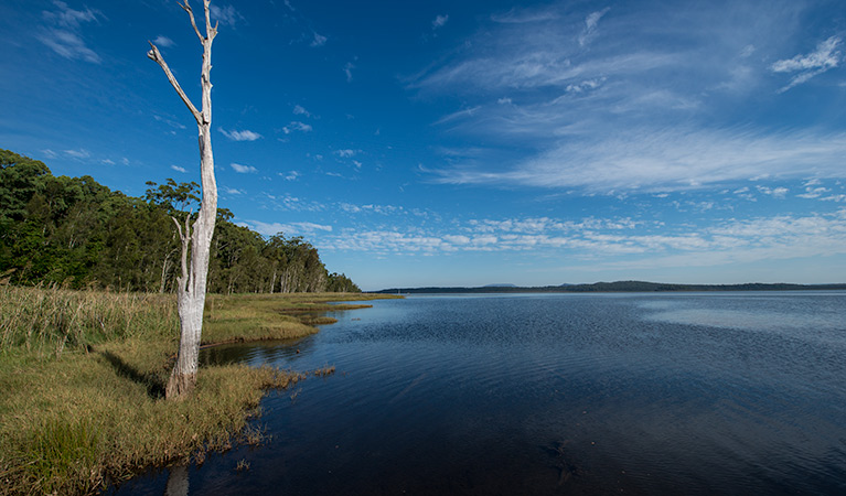 Lake Innes Nature Reserve - Accommodation Rockhampton