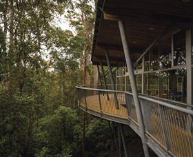 Tarkine Forest Adventures - Dismal Swamp - Accommodation Rockhampton