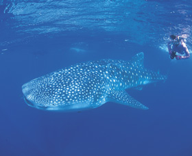 Ningaloo Reef - Accommodation Rockhampton