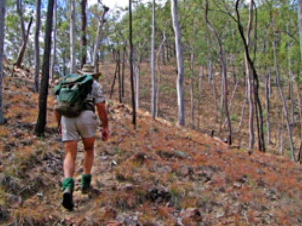 Shepherd's Peak Trail - Accommodation Rockhampton