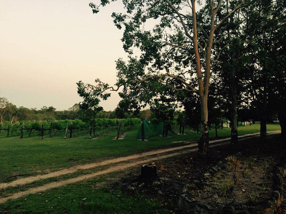 Brierley Wines - Accommodation Rockhampton