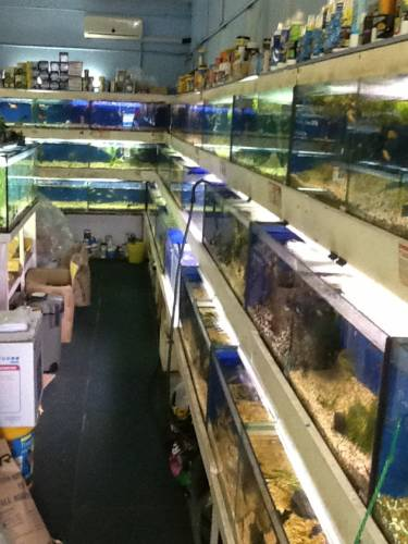Clearwater Aquariums - Accommodation Rockhampton
