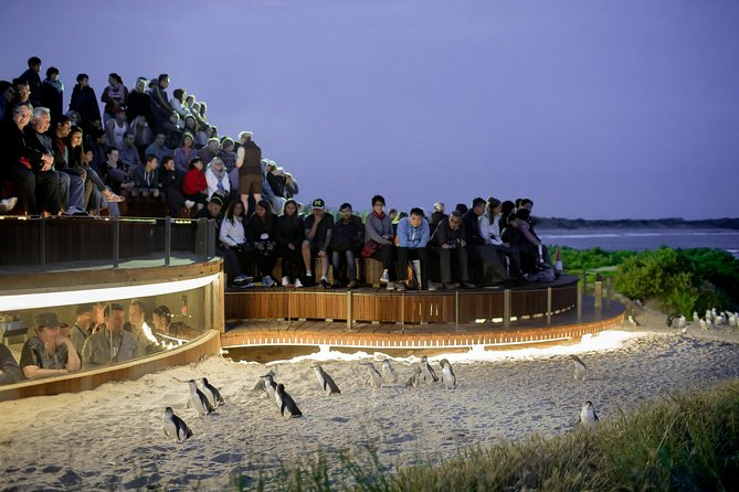 1 Day Private Phillip Island Tour VIP Charter up to 9 People - Accommodation Rockhampton