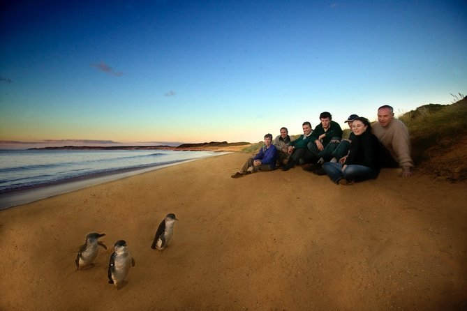 Phillip Island Ultimate Penguin Eco Tour or Skybox Experience - Accommodation Rockhampton