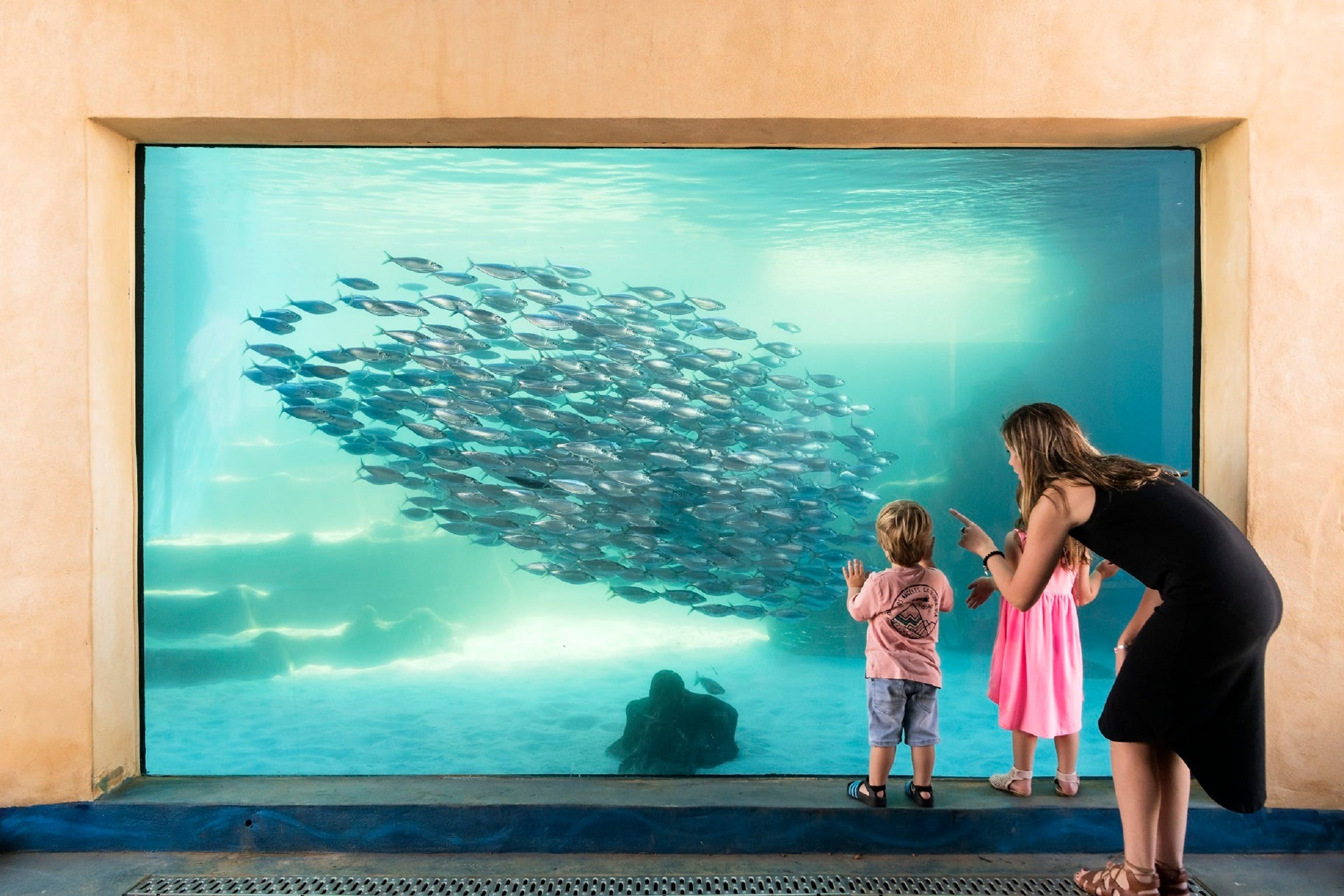 AQWA the Aquarium of Western Australia - Accommodation Rockhampton