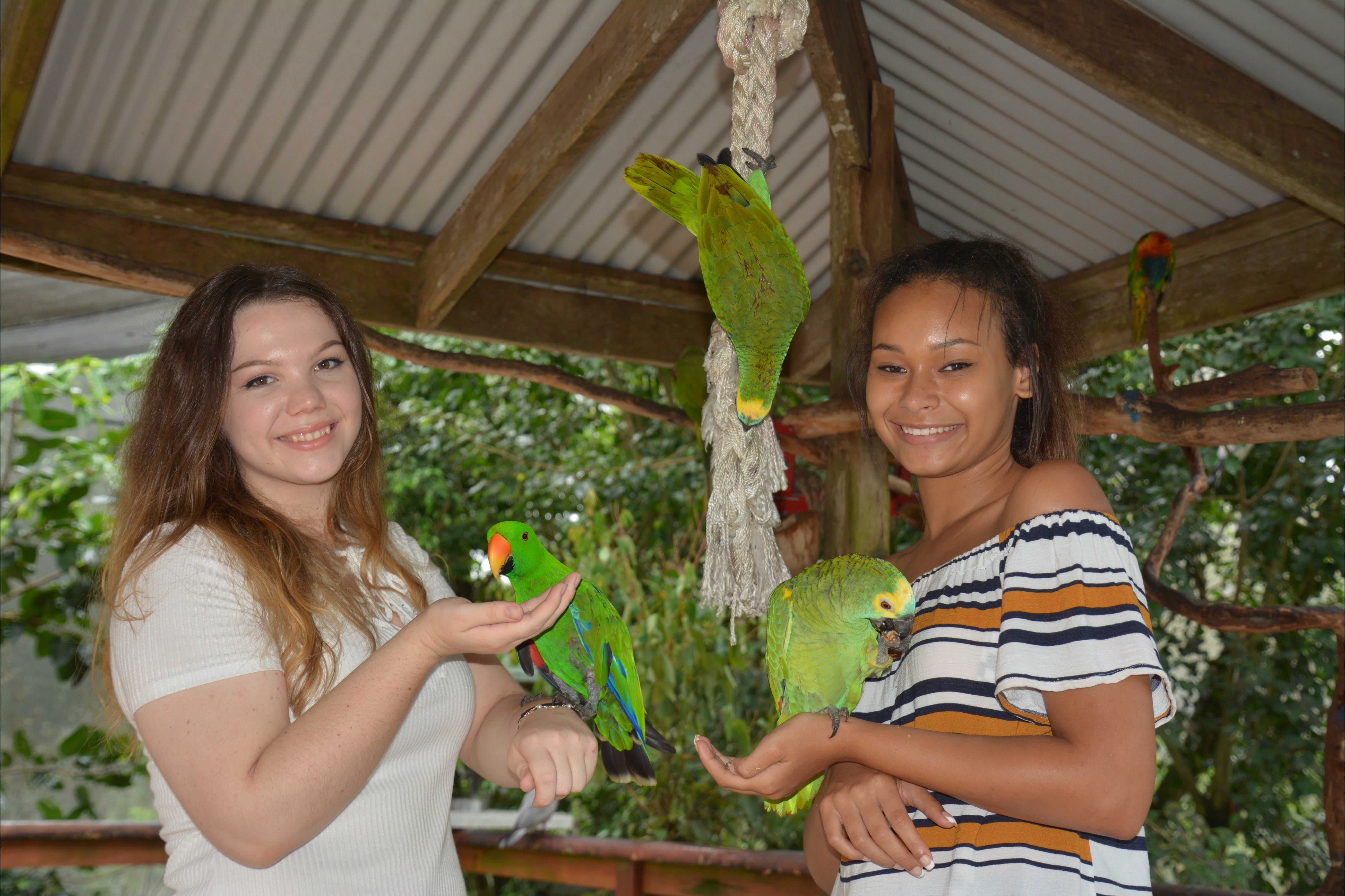Birdworld Kuranda - Accommodation Rockhampton
