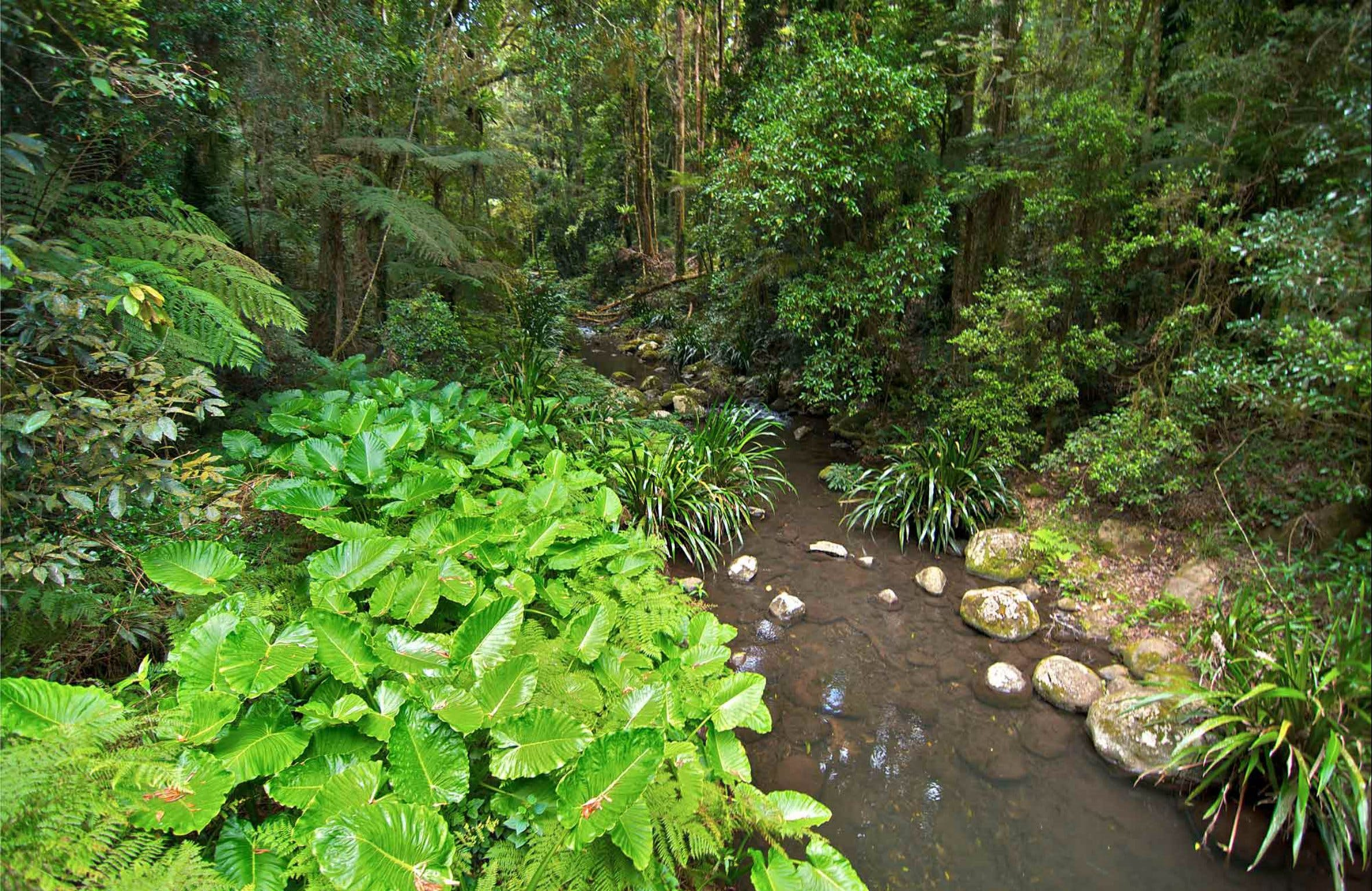 Brindle Creek Walking Track - Accommodation Rockhampton