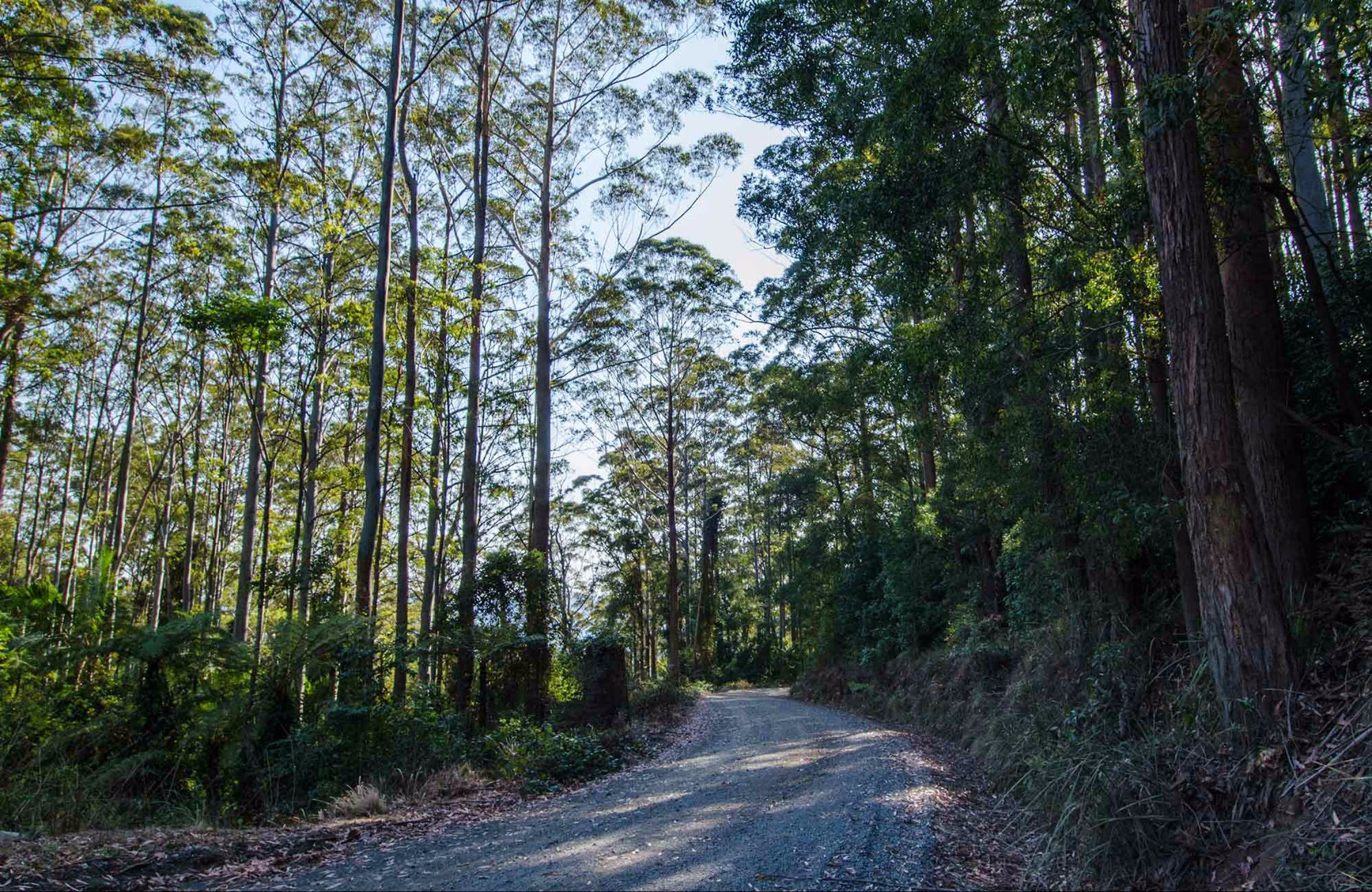 Hastings Forest Way Touring Route - Accommodation Rockhampton