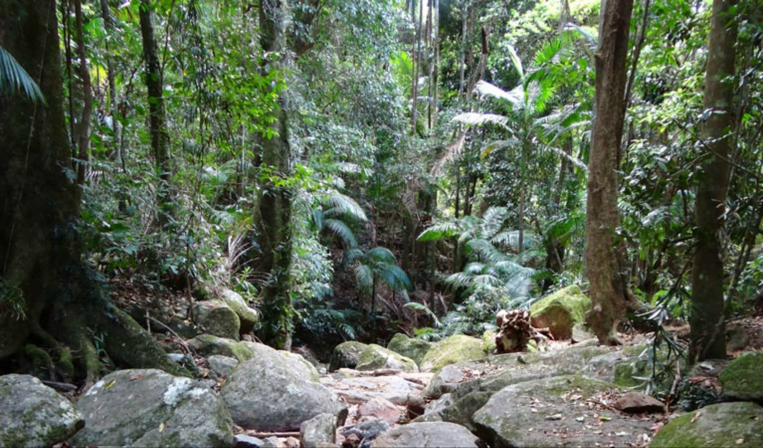 Lyrebird track - Accommodation Rockhampton