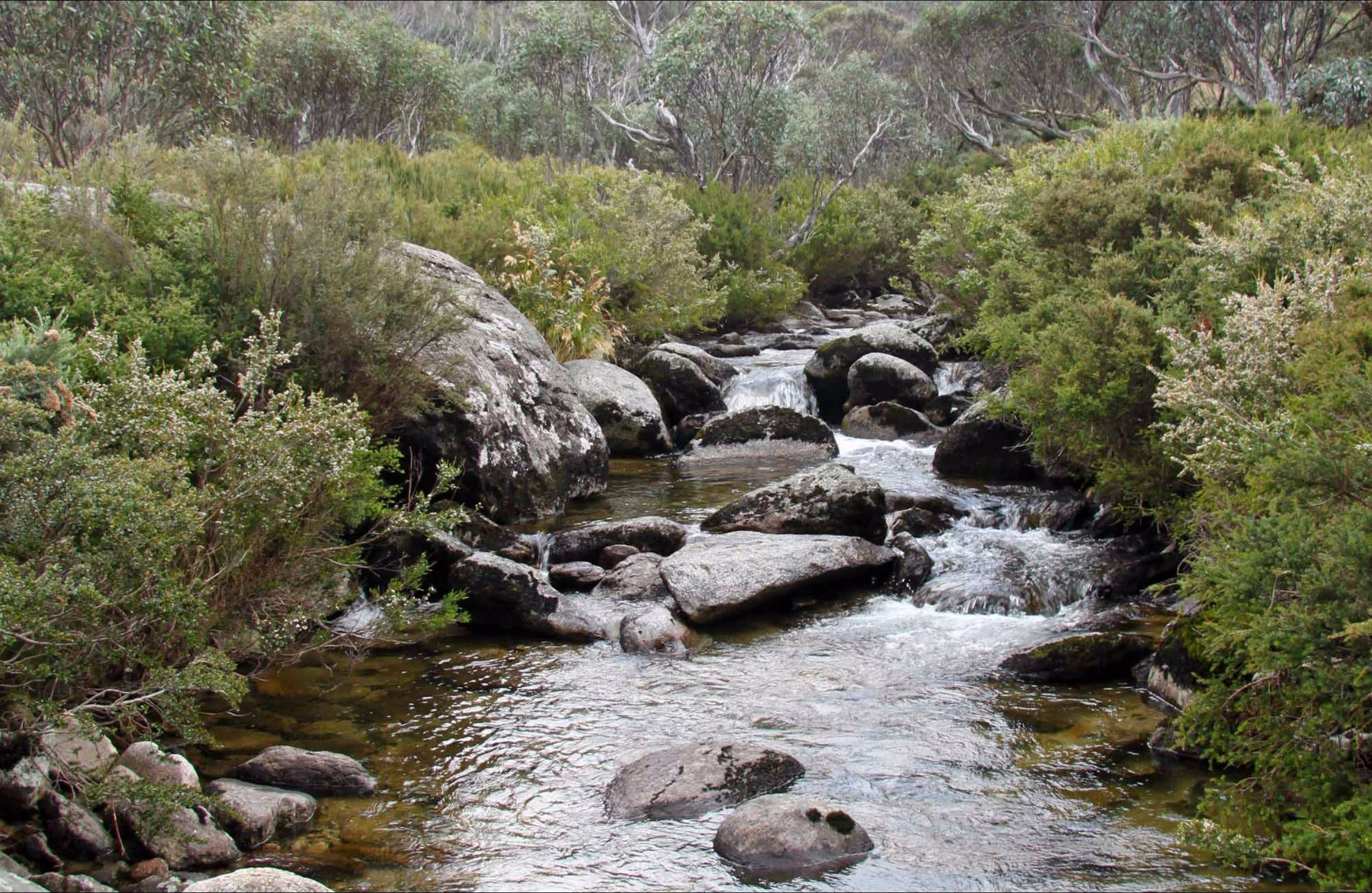 Thredbo River Track - Accommodation Rockhampton