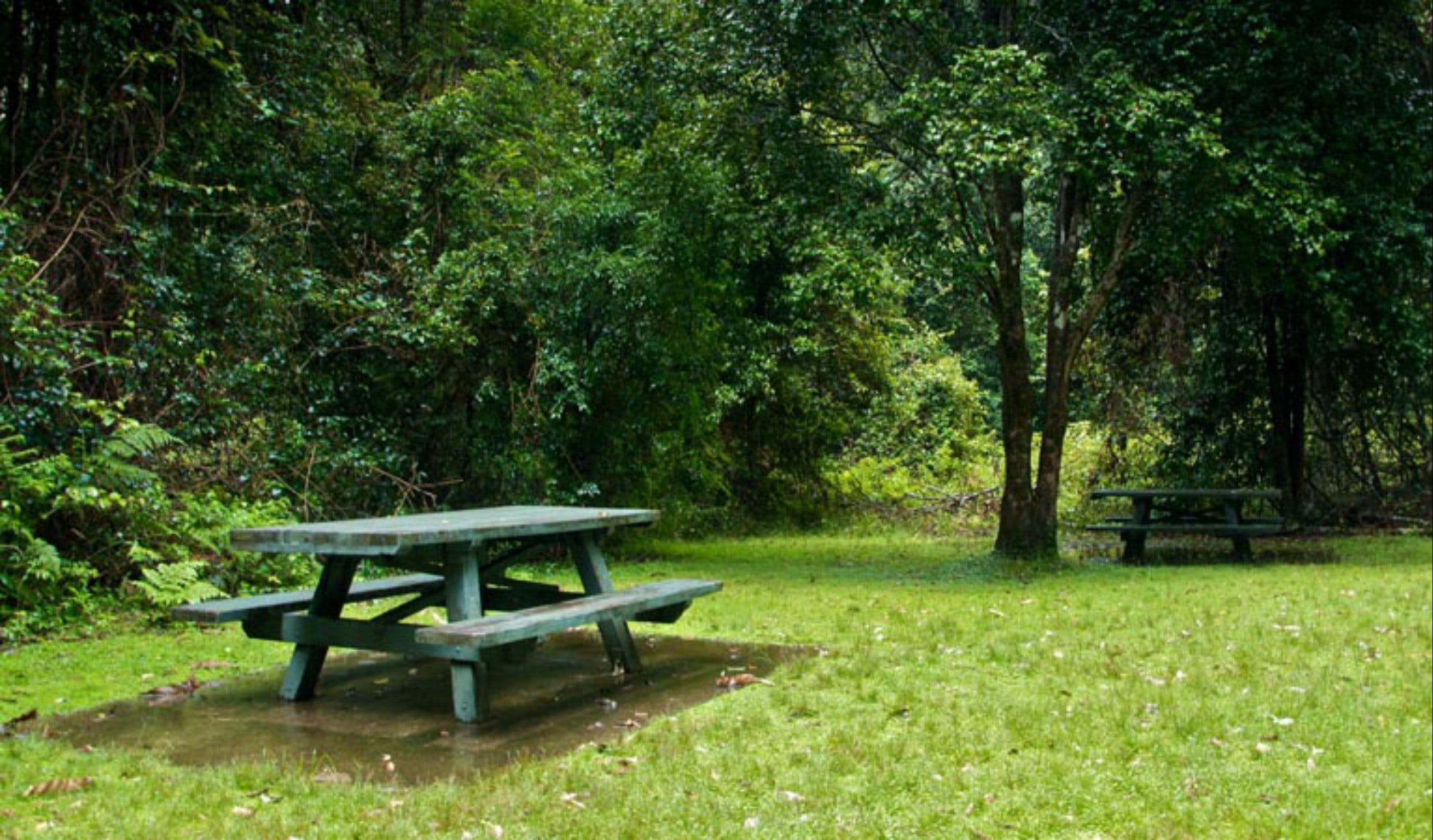 Williams River picnic area - Accommodation Rockhampton