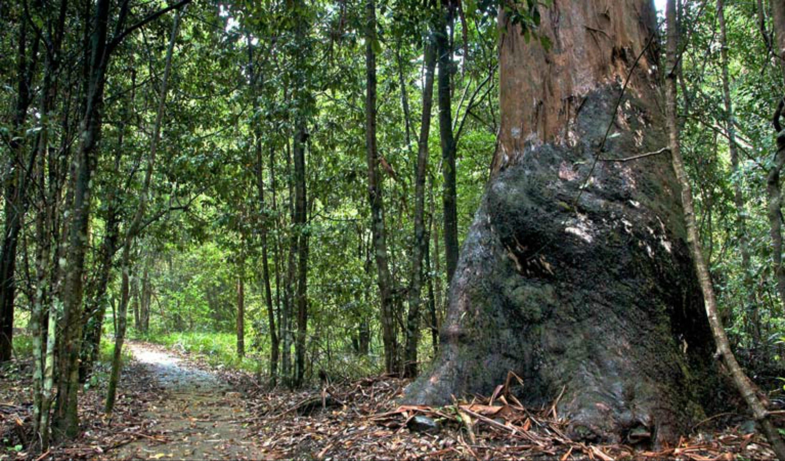 Blue Gum loop trail - Accommodation Rockhampton