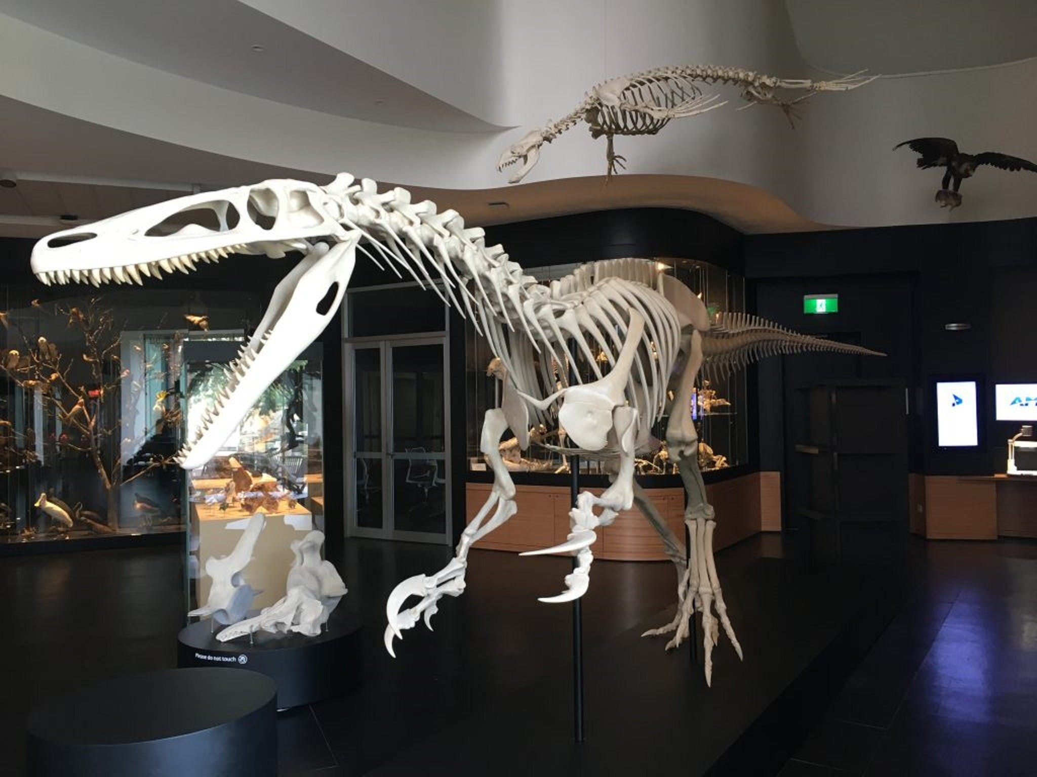 UNE Natural History Museum - Accommodation Rockhampton