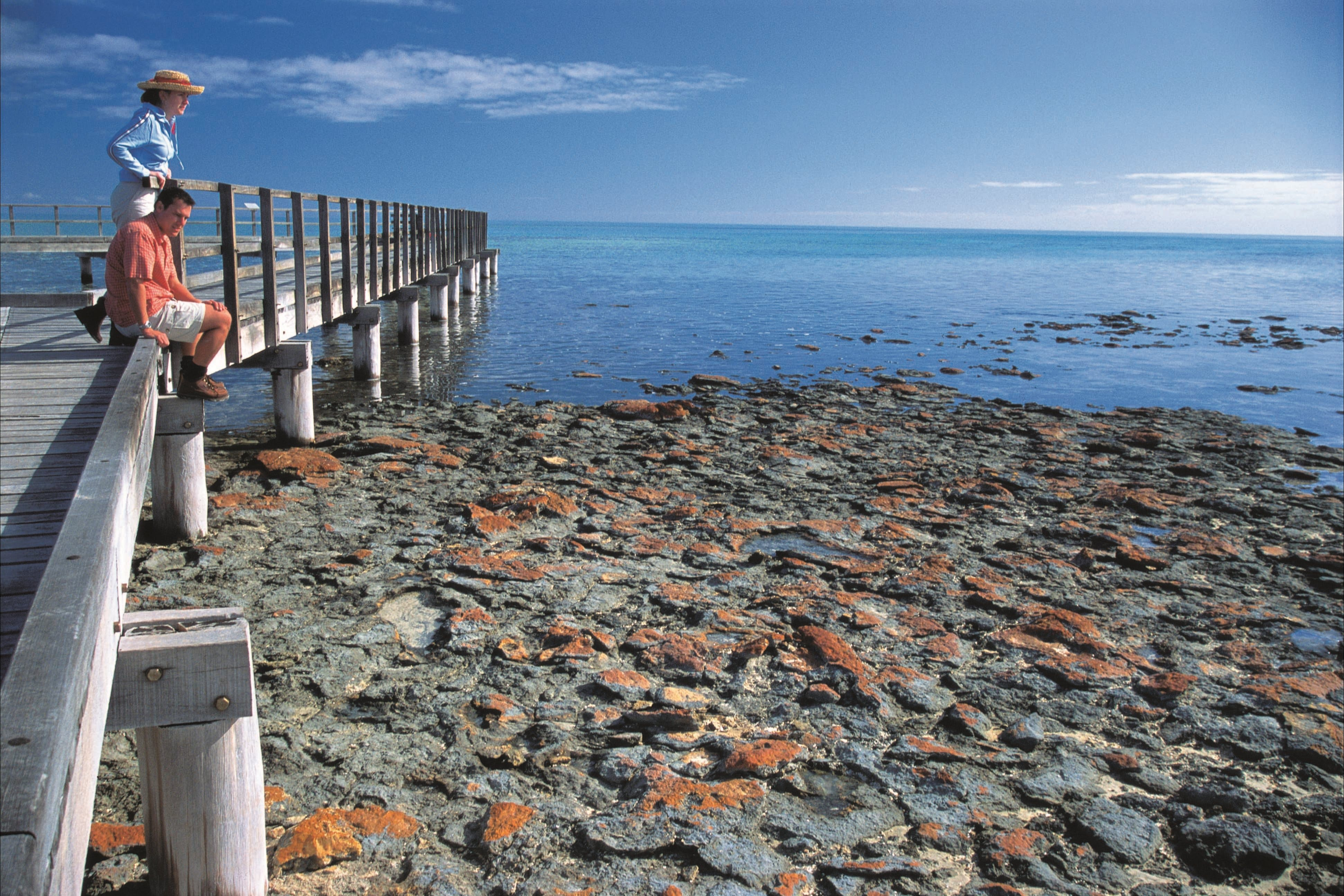 Hamelin Pool Stromatolites - Accommodation Rockhampton