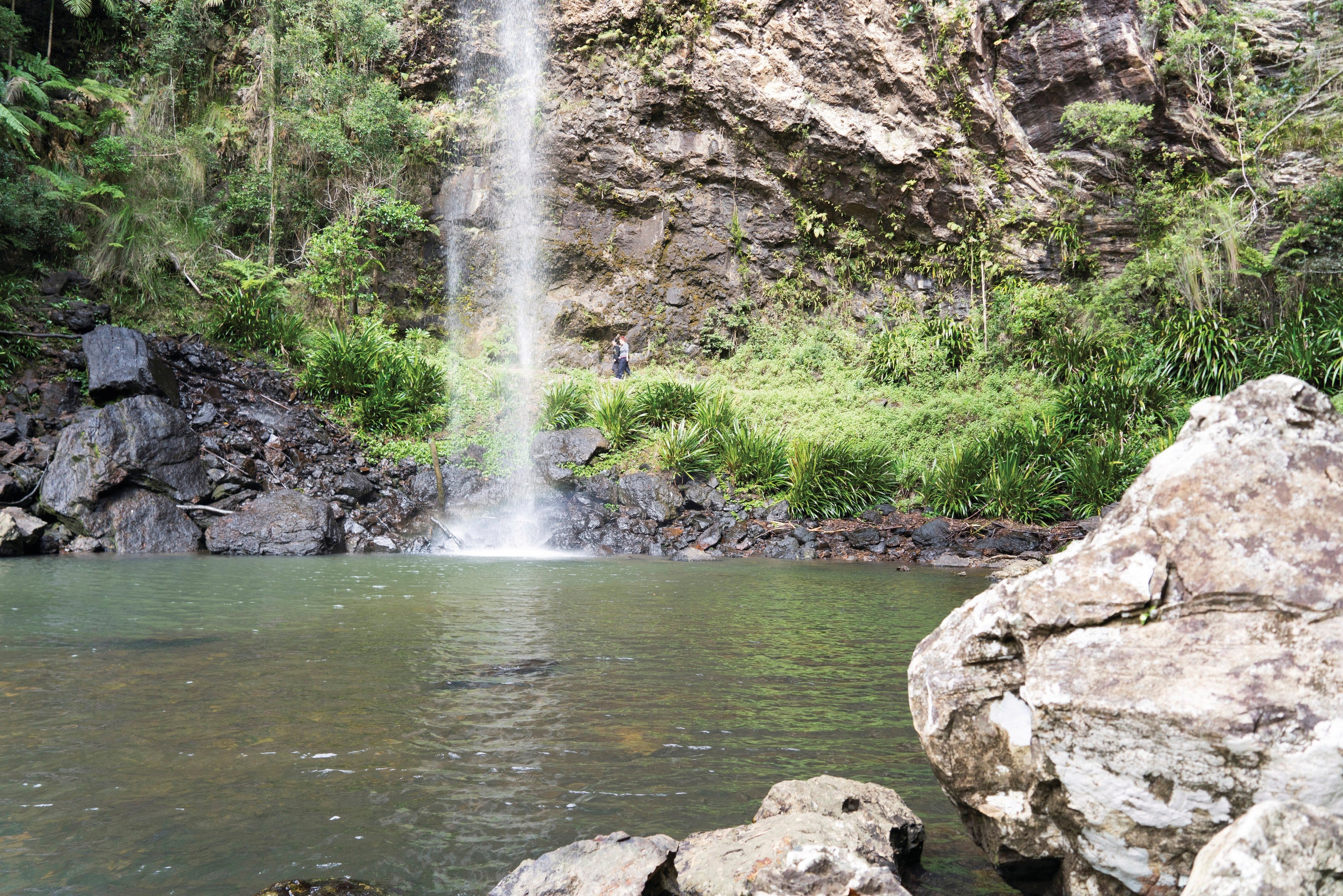 Twin Falls Circuit Springbrook National Park - Accommodation Rockhampton