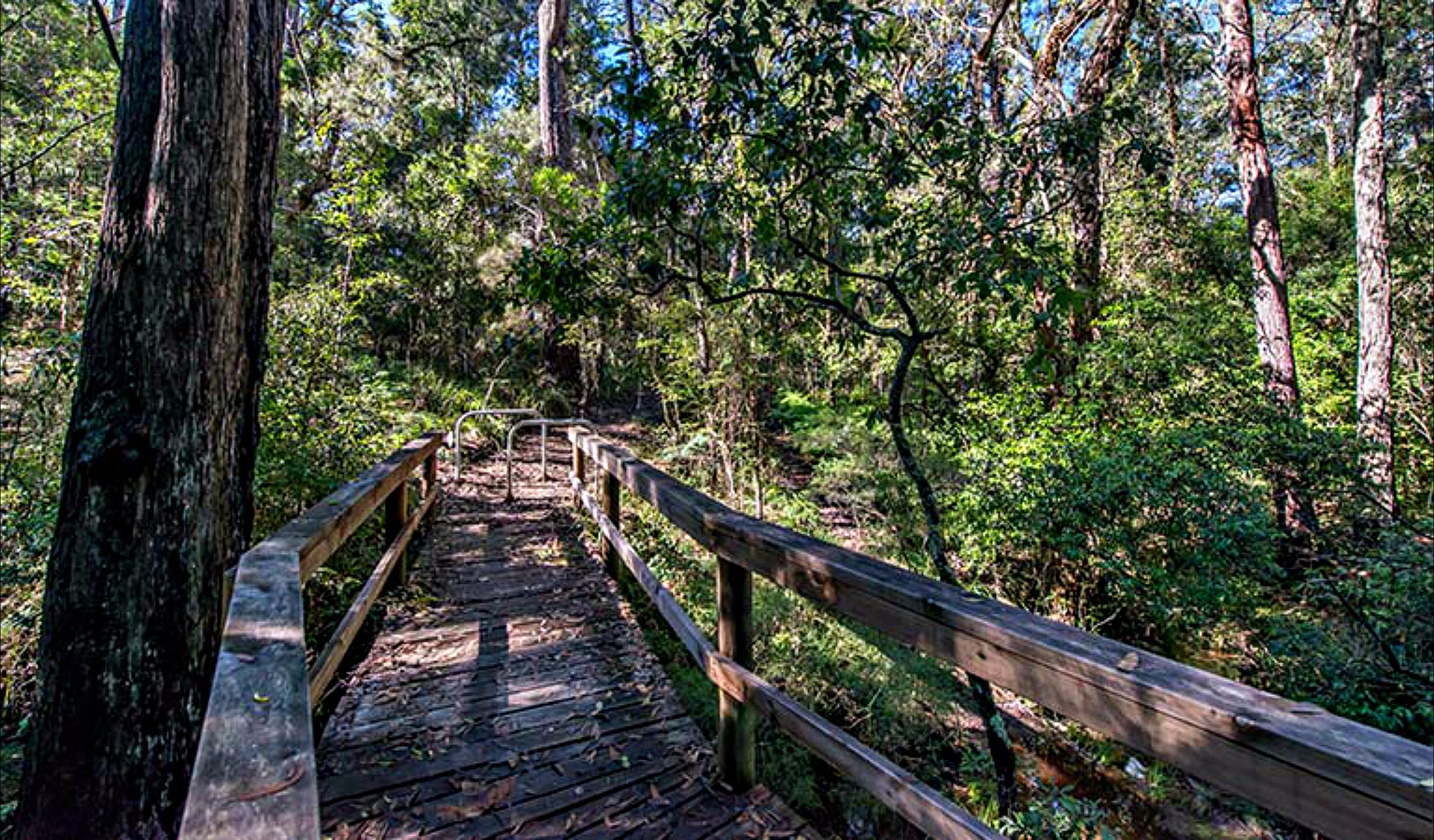Dawson River Walking Track - Accommodation Rockhampton