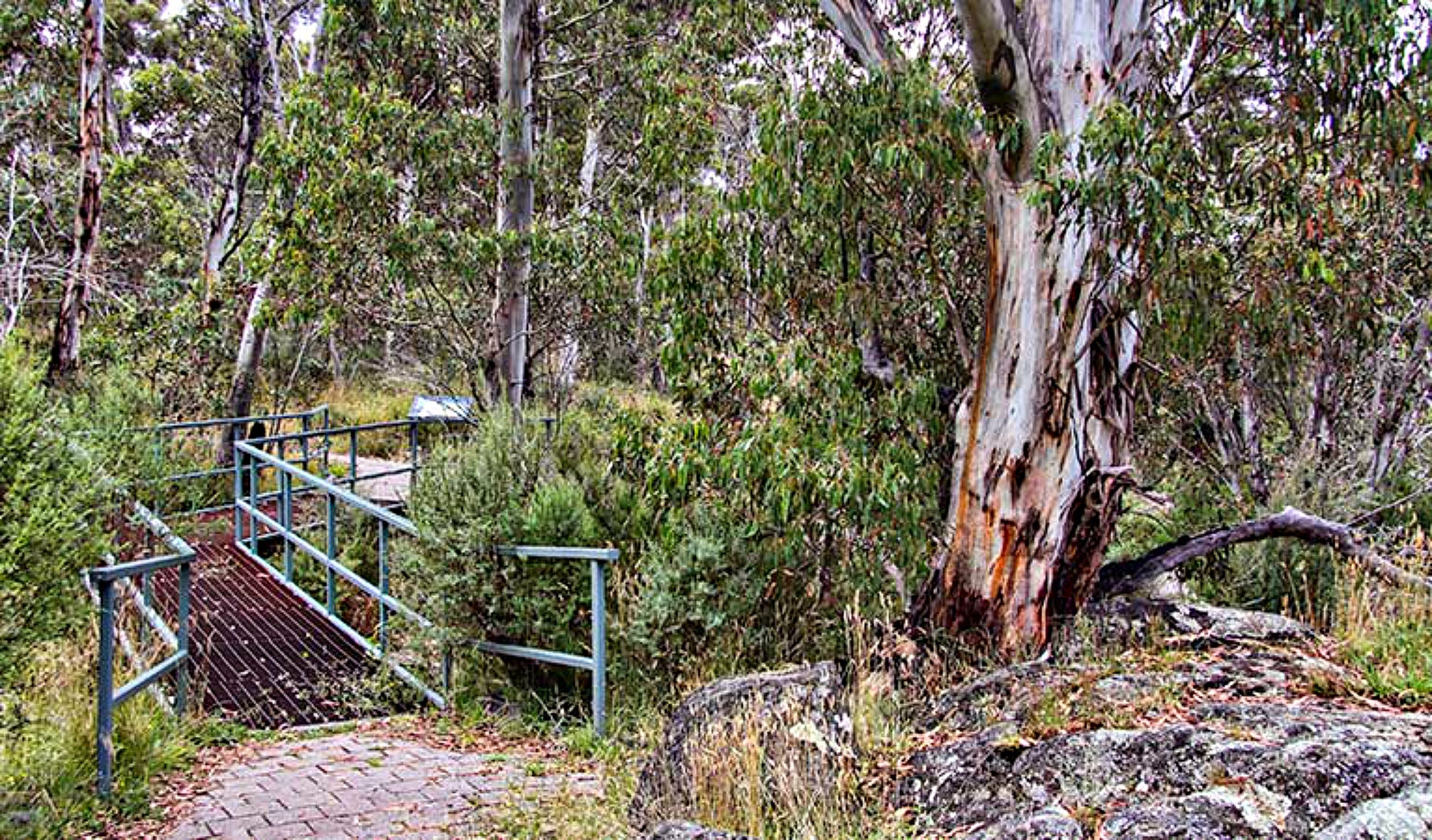 Sawpit Walking Track - Accommodation Rockhampton