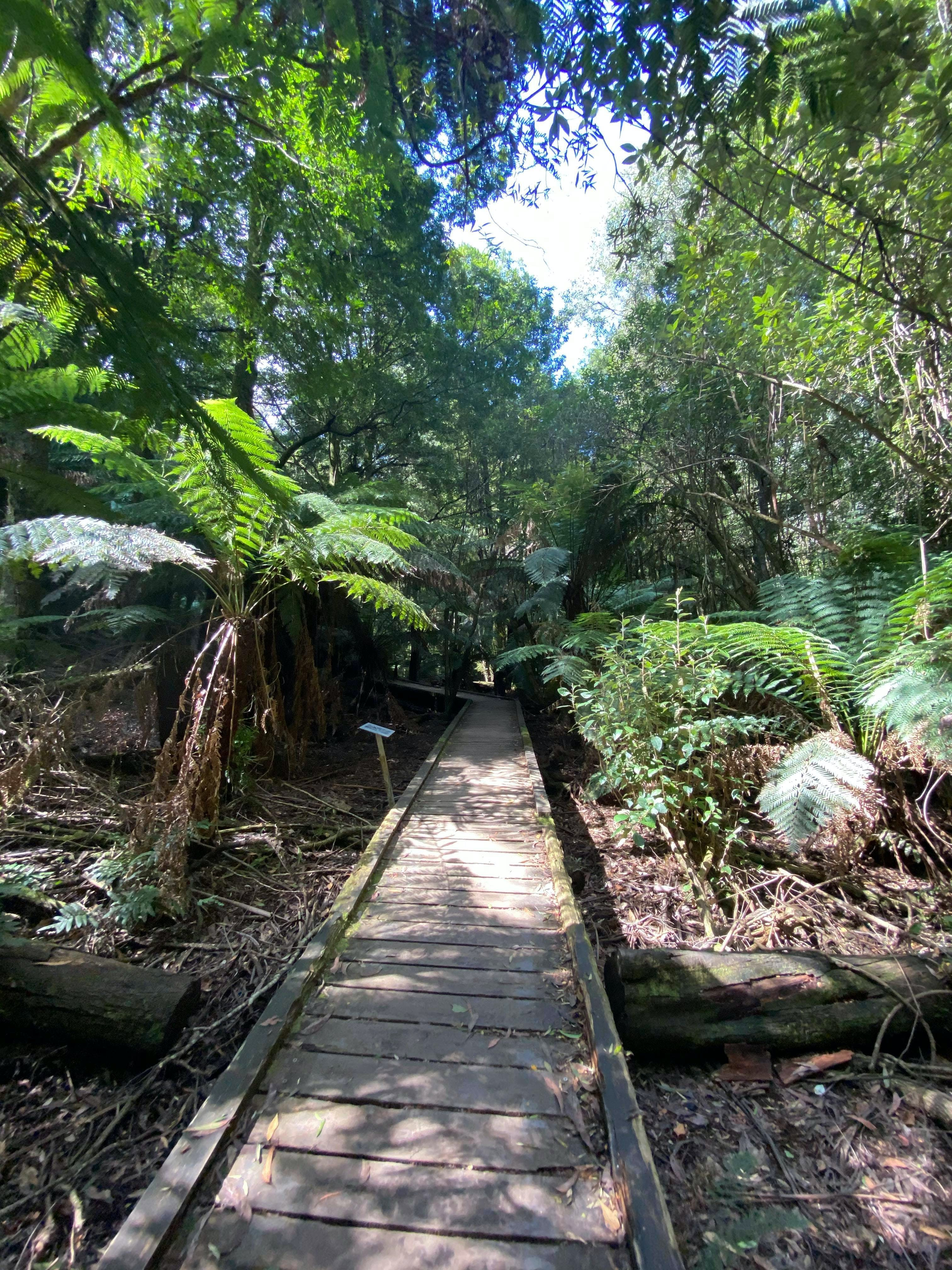 Wirrawilla Rainforest Walk - Accommodation Rockhampton