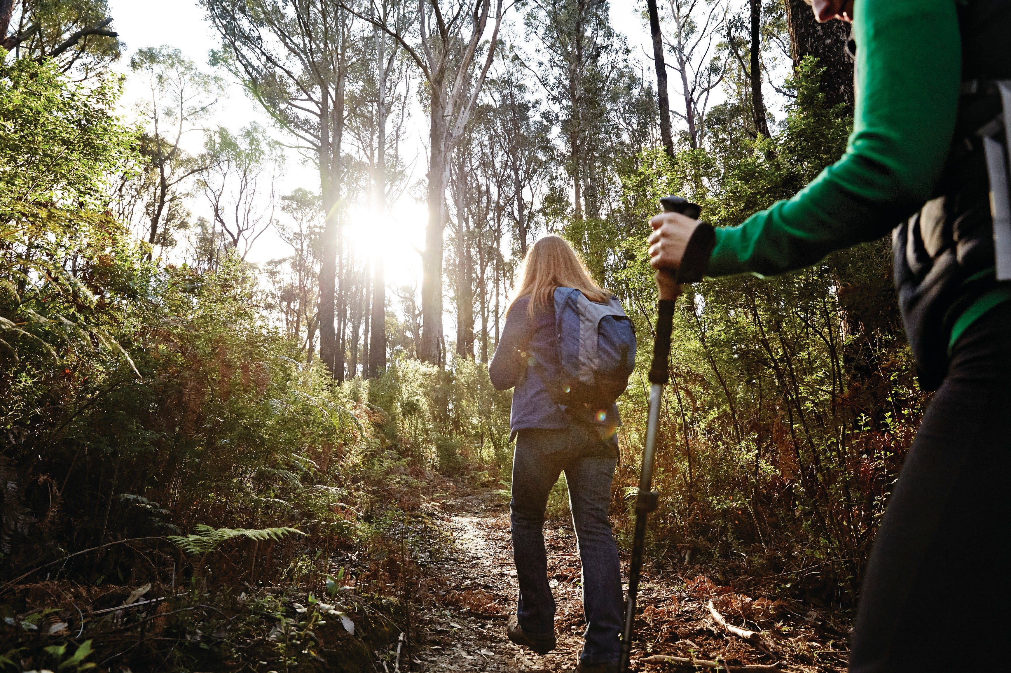 Kinglake National Park - Accommodation Rockhampton