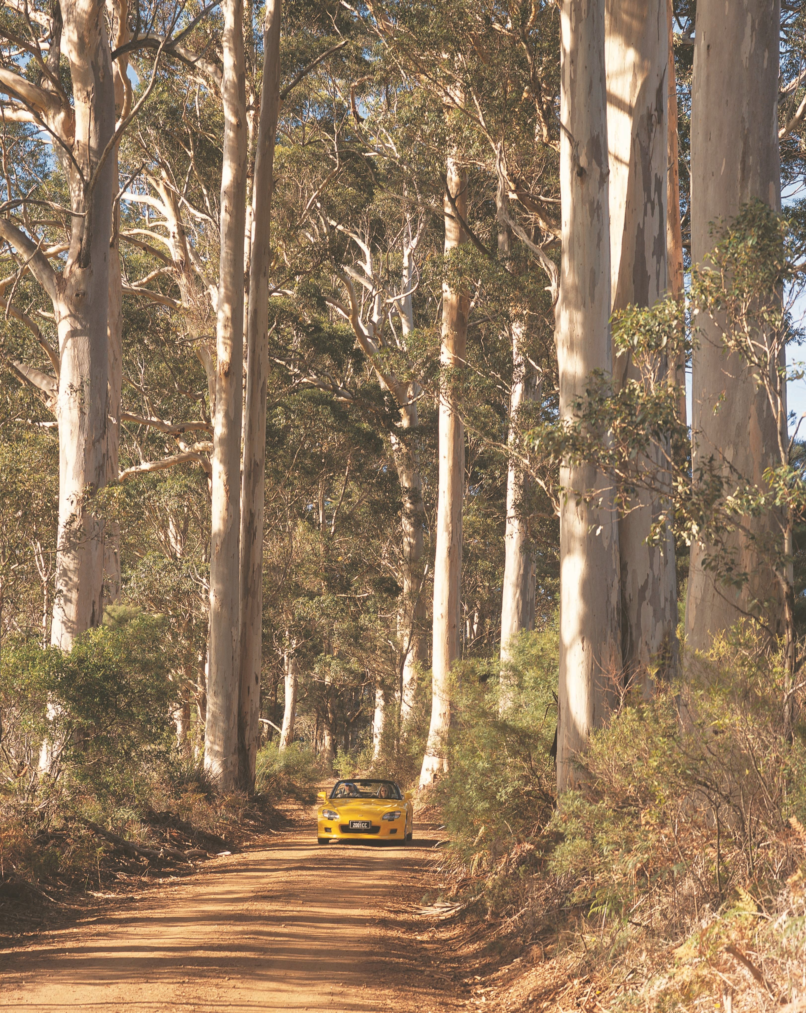 The Great Forest Trees Drive - Accommodation Rockhampton