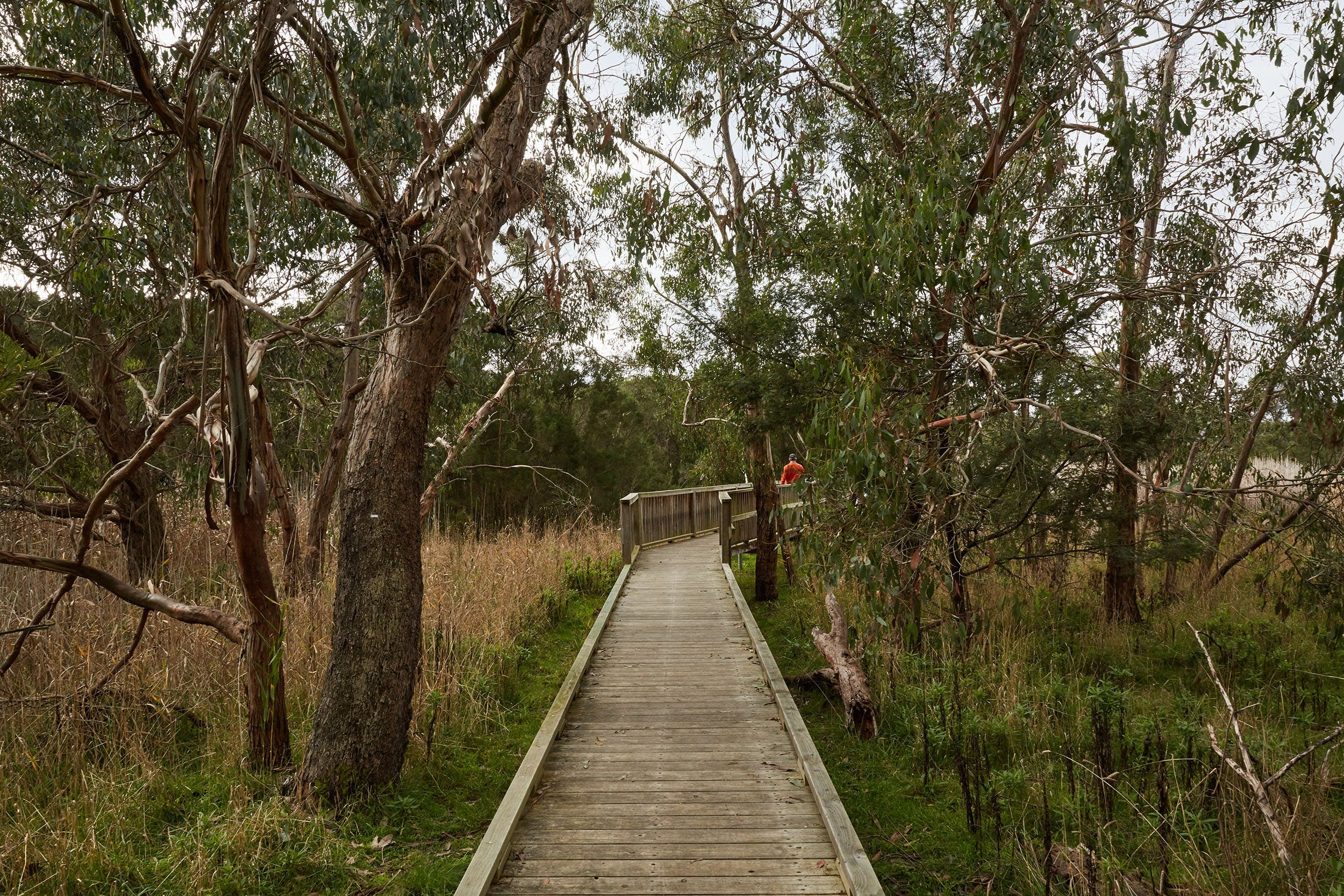 The Briars Park Walking Trails - Accommodation Rockhampton