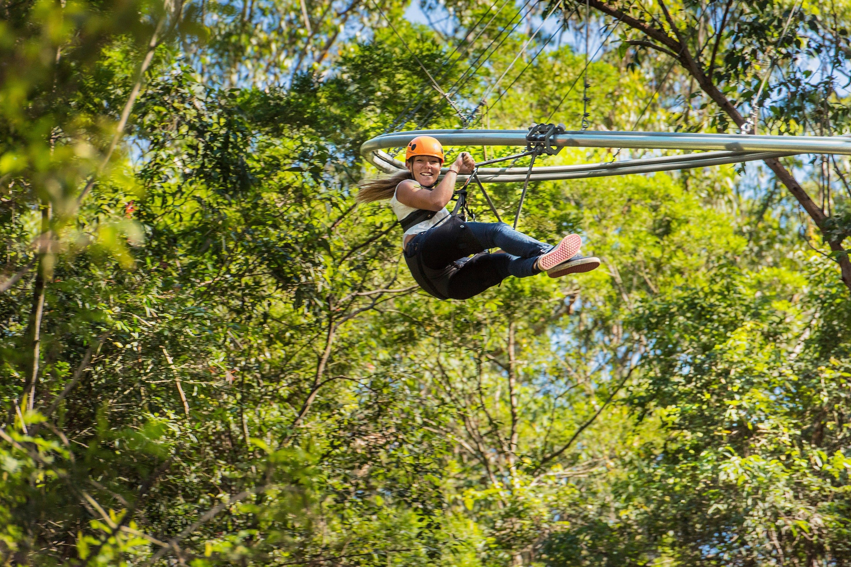TreeTop Crazy Rider - Accommodation Rockhampton