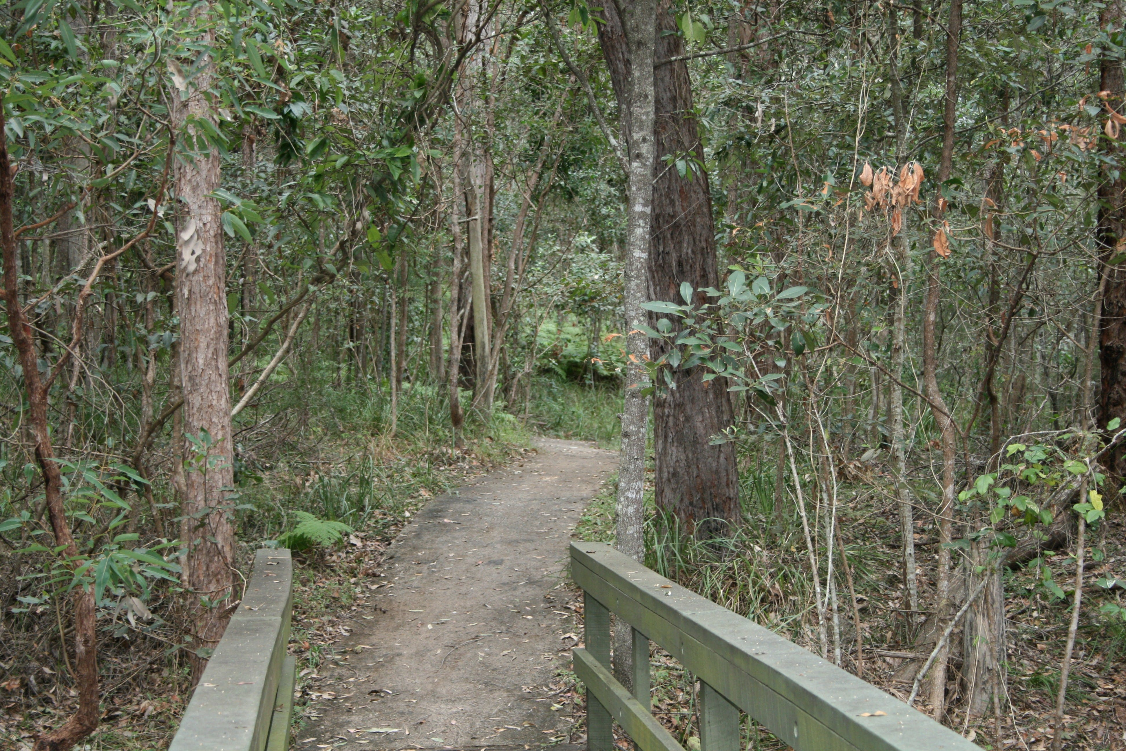 Springwood Conservation Park - Accommodation Rockhampton