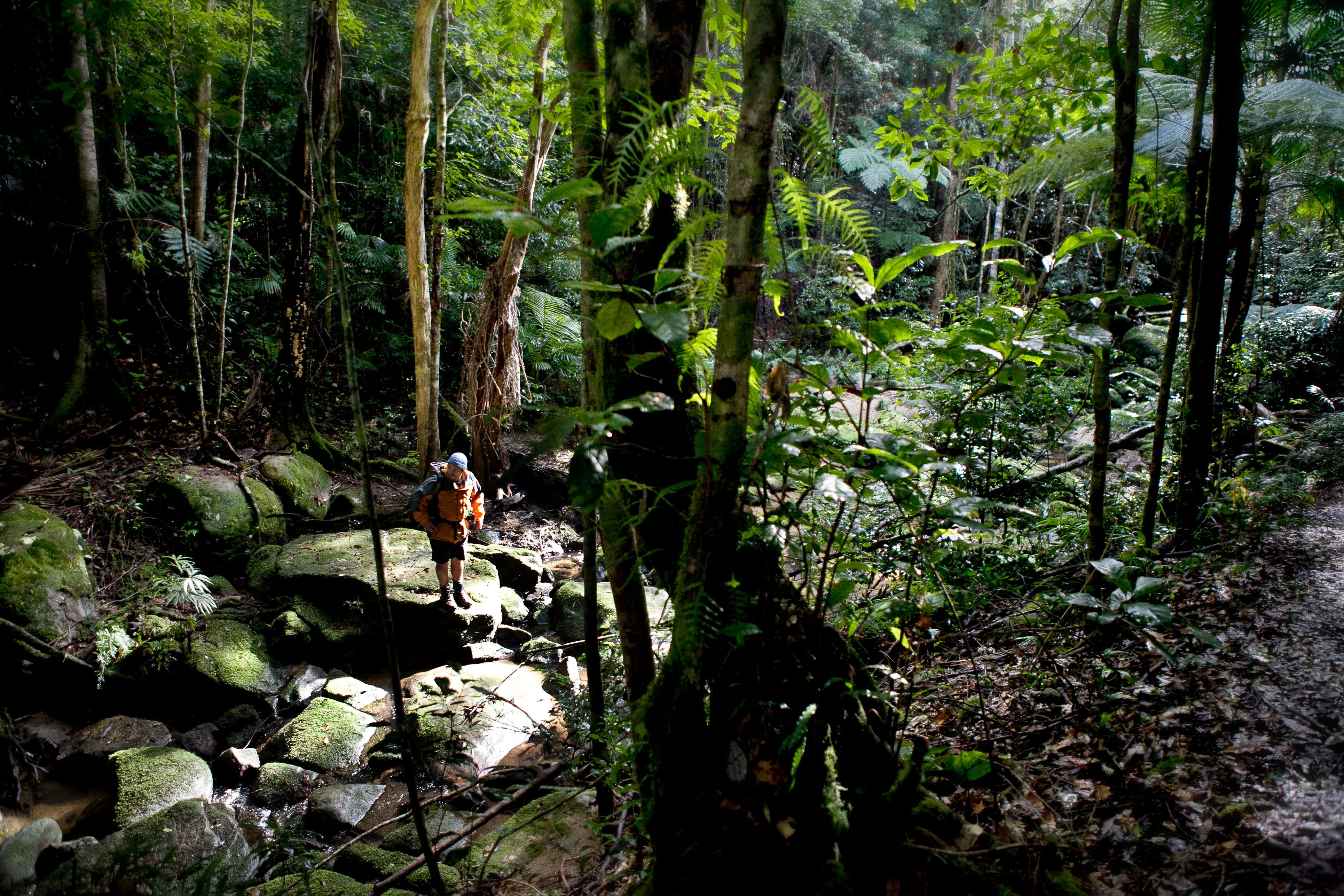 Strickland State Forest - Accommodation Rockhampton
