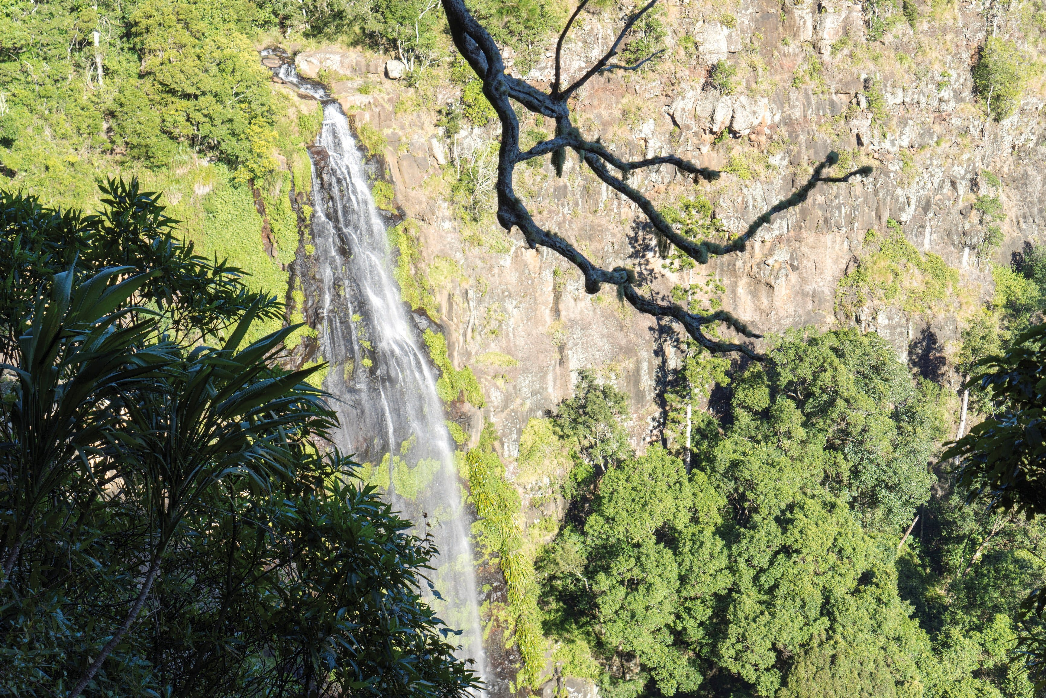 Morans Falls track Lamington National Park - Accommodation Rockhampton