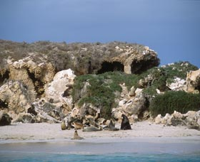 Jurien Bay Marine Park - Accommodation Rockhampton