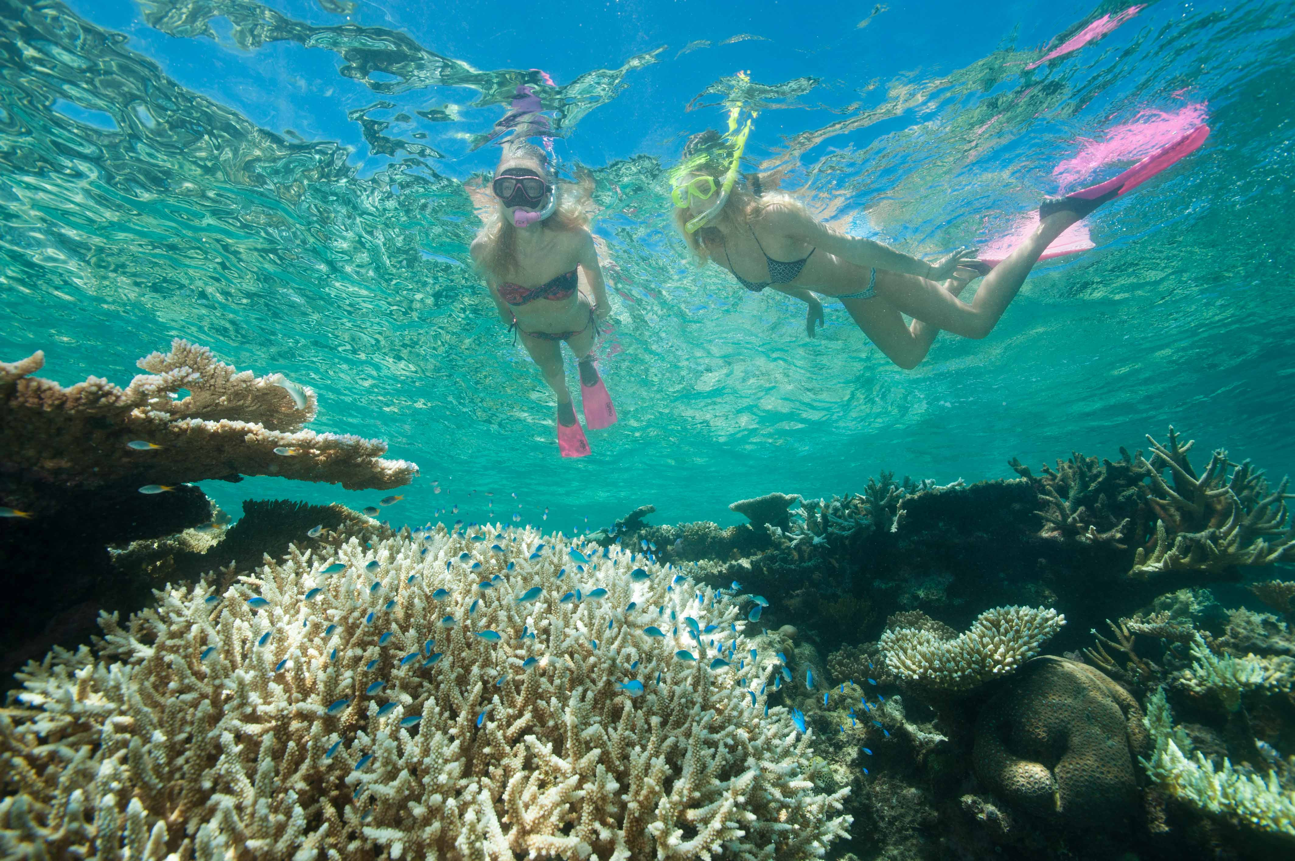 Down Under Cruise And Dive - Accommodation Rockhampton