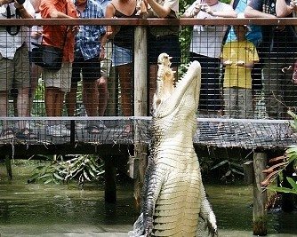 Hartley's Crocodile Adventures - Accommodation Rockhampton