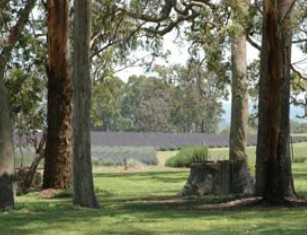 Aloomba Lavender - Accommodation Rockhampton