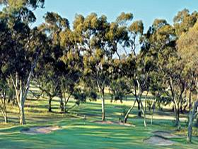 Tanunda Pines Golf Club - Accommodation Rockhampton
