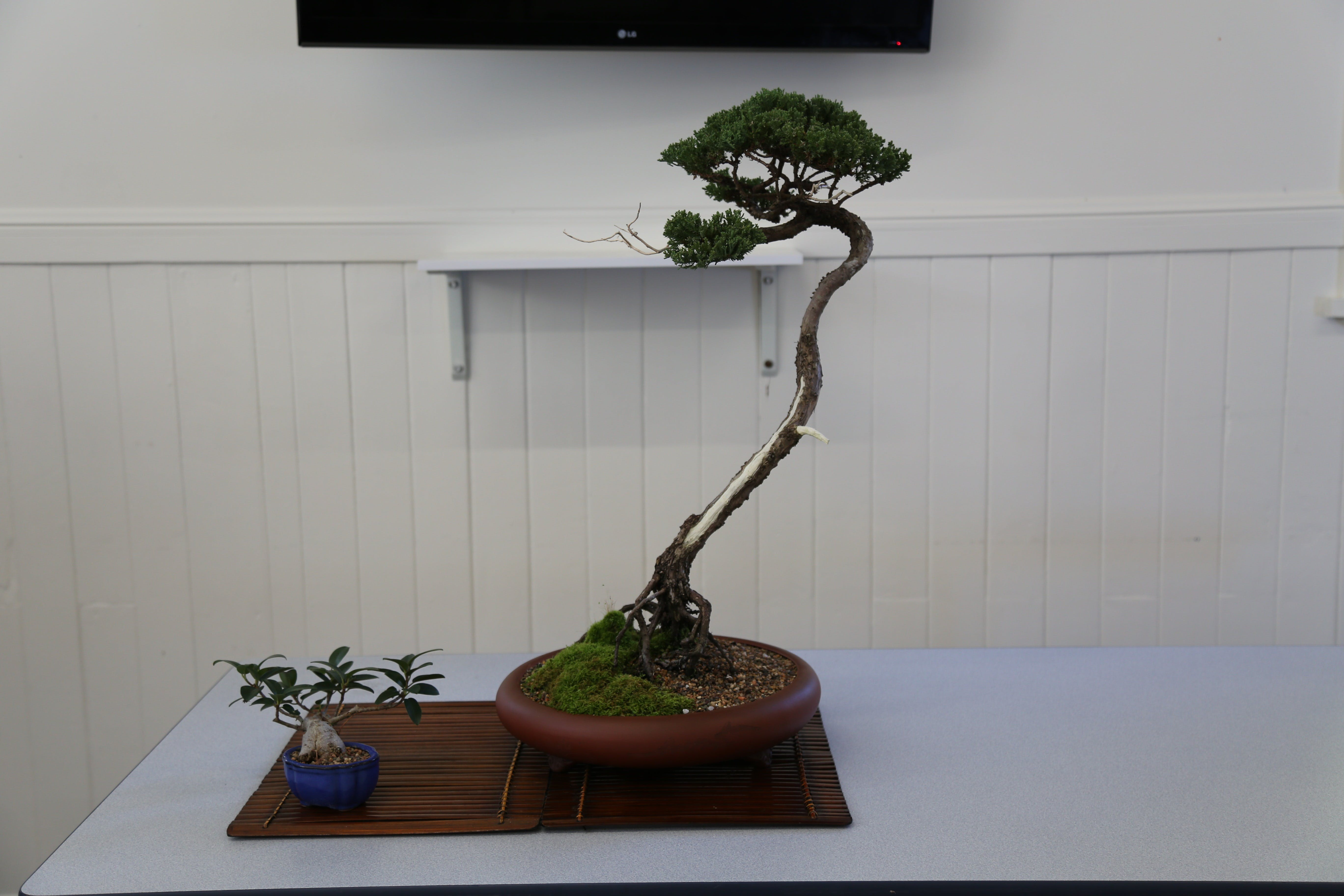 Wauchope Bonsai Workshop Group - Accommodation Rockhampton