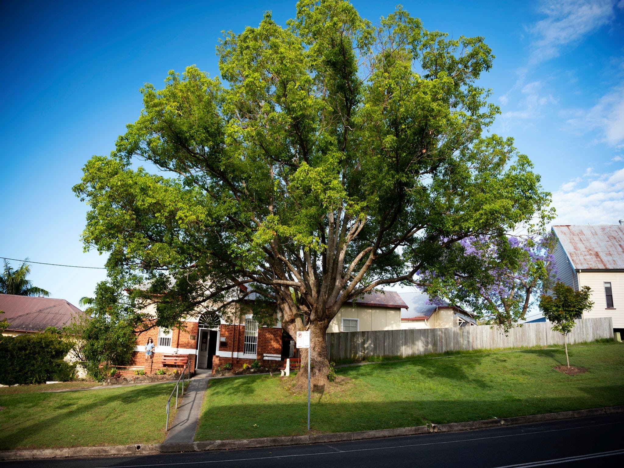 Big Bat Wildlife and Eco Festival - Accommodation Rockhampton