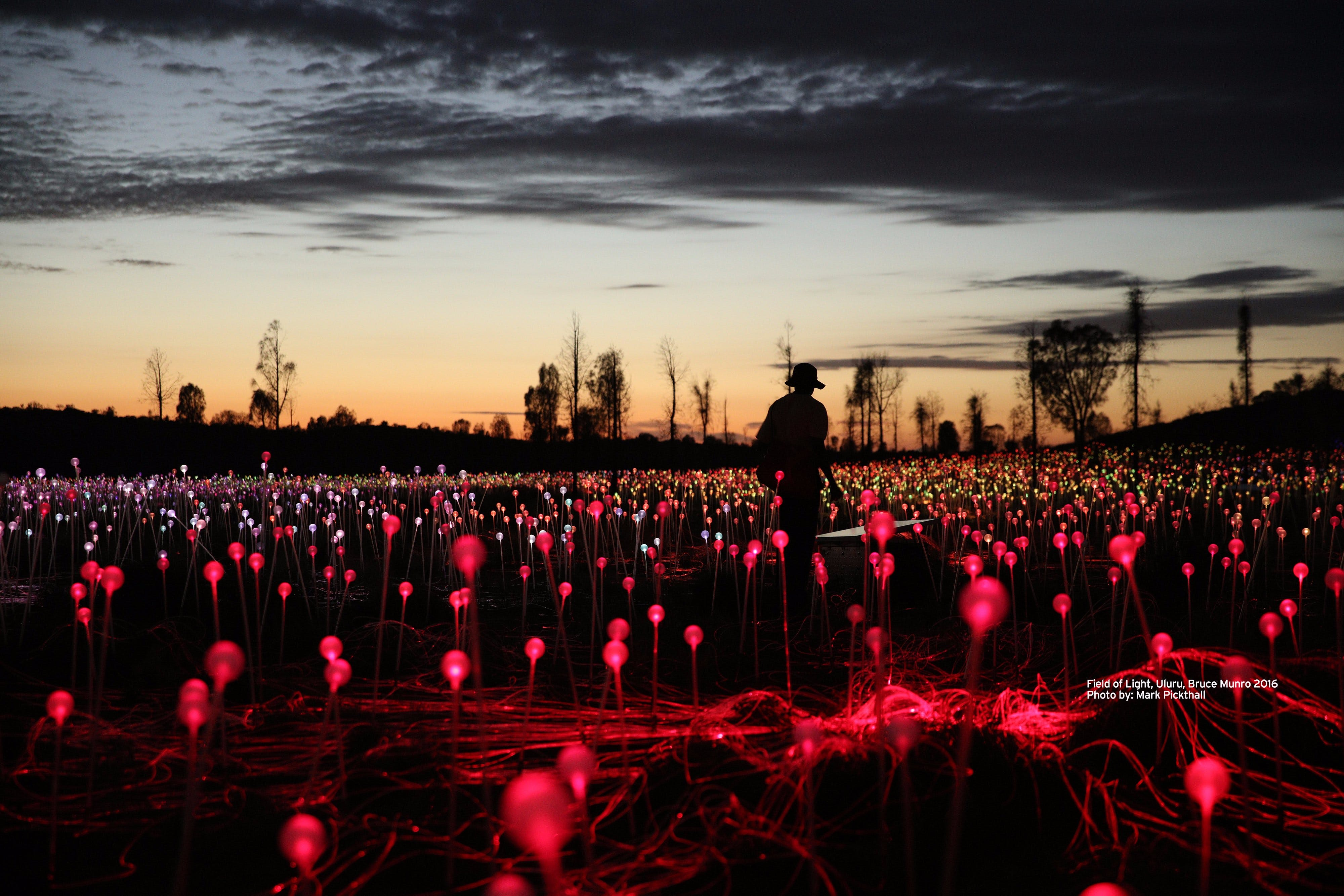 Field of Light Uluru - Accommodation Rockhampton