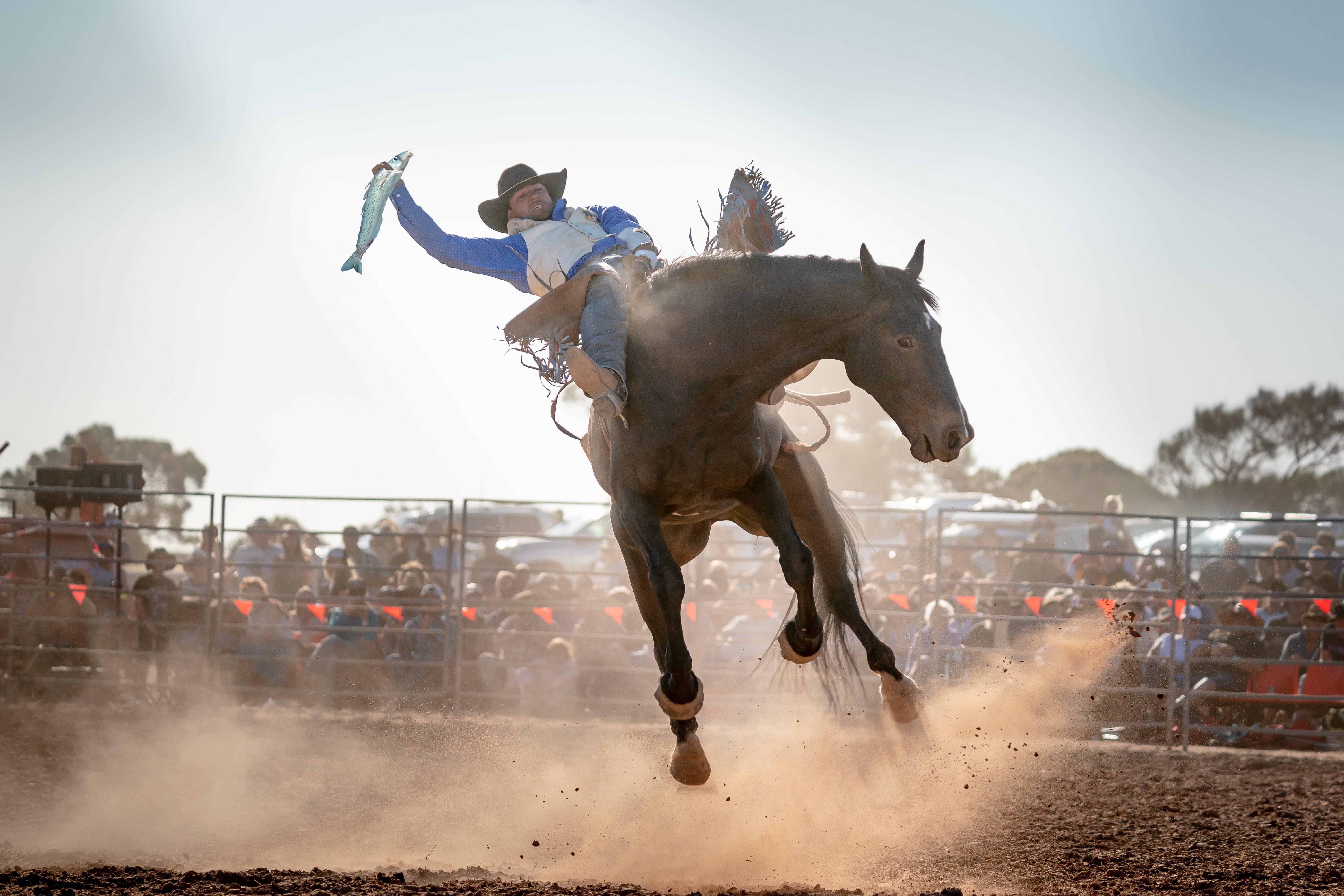 Rodeo by the Sea - Streaky Bay - Accommodation Rockhampton
