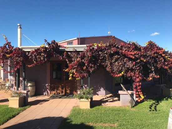 Jester Hill Wines - Accommodation Rockhampton